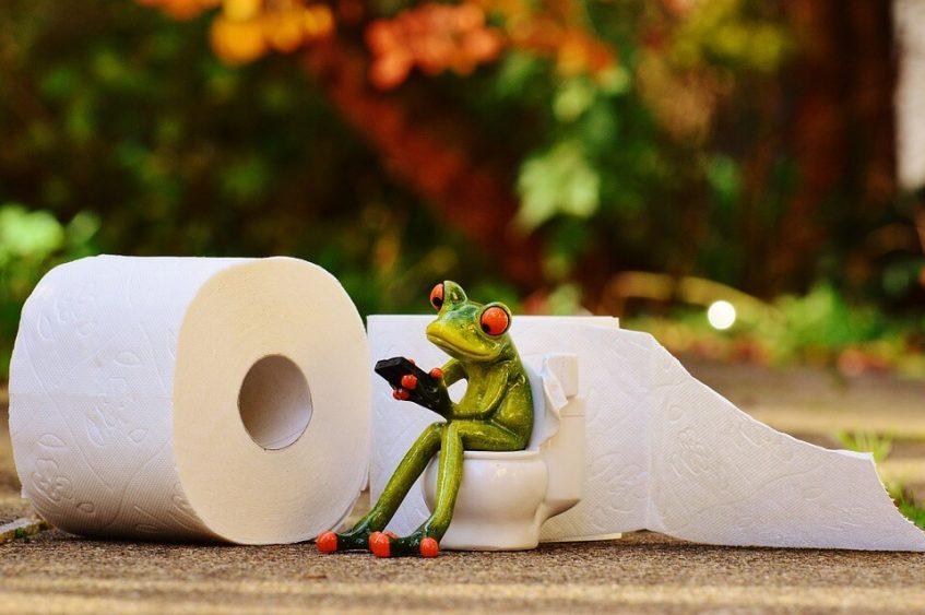 frog-1037252_960_720